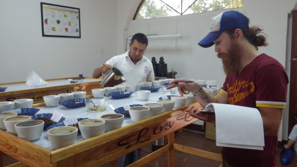 cupping coffee, coffee, cupping, beard, insight coffee, sacramento coffee, coffee roaster, california coffee
