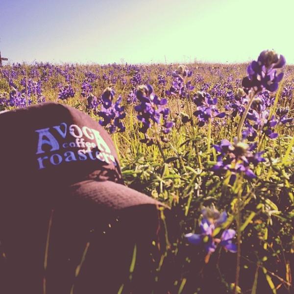 flowers, coffee, coffee texas, texas coffee roaster, field, meadow, commercial coffee roaster